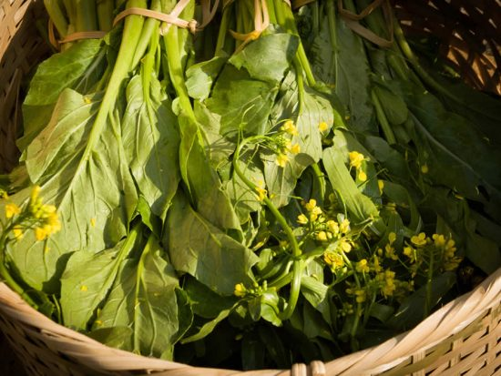 Fresh Mustard greens with yellow flowers